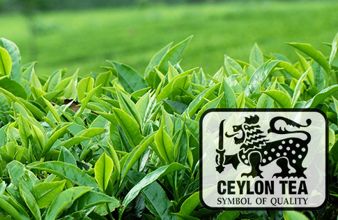 Ceylon Tea – Ceylon Tea Guide – Guide to Ceylon Tea – Guide to exporting tea from Sri Lanka – Sri Lanka Tea Information by Ceylon Black Tea Exports – Ceylon Tea Guide of reputed Tea Exporters in Sri Lanka – Ceylon Tea Exporters List – Ceylon Tea Exporters Guide – Sri Lanka Tea Exporters – Tea Exporters in Sri Lanka